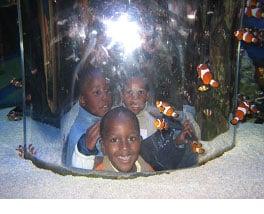 jan-2010-fishbowl
